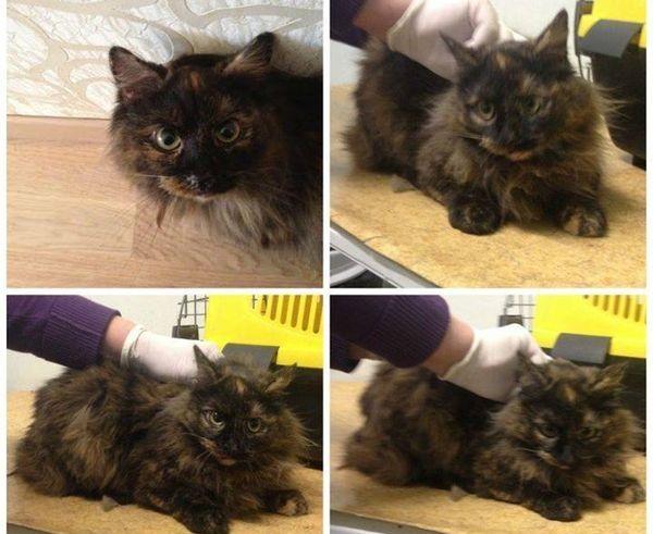 Marmurinė katytė
