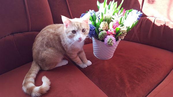 Katinukas Princas iš namų_opt