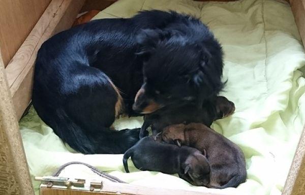 Trys šuniukai iš Birštono