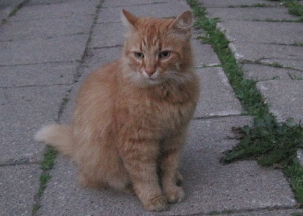 Katinas Svarainis