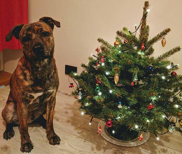 Baris ruošiasi Kalėdoms_opt