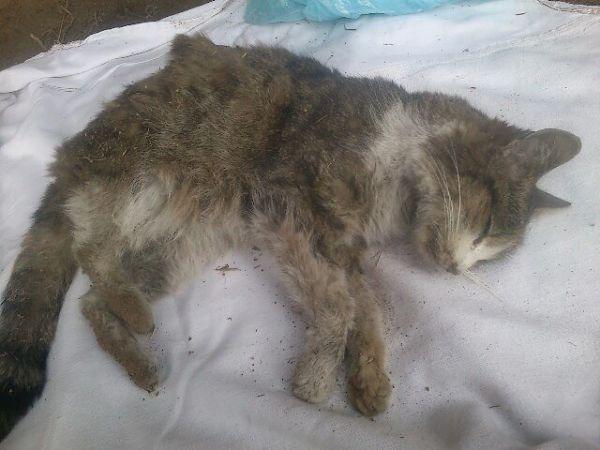 Užmušta katytė