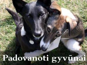 Padovanoti gyvūnai