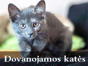 Dovanojamos katės